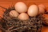 Ukraine opens a new market for egg exports