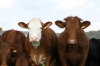 Japan lifts all restrictions on US beef
